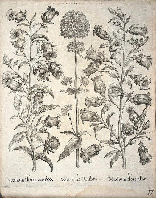 Ботаническое рисование
